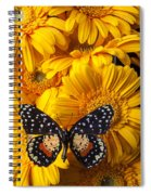 Spotted Butterfly On Yellow Mums Spiral Notebook