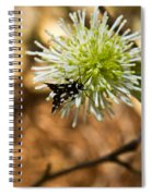 Spotted Moth On Fothergilla Spiral Notebook