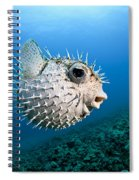 Spotted Porcupinefish Spiral Notebook
