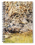 Spotted Sandpiper At The Canal Spiral Notebook