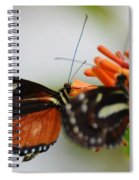Spotted Tiger Glassywing Spiral Notebook