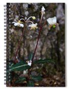 Spotted Wintergreen Plants Spiral Notebook