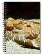 Spotted Wobbegong Shark Spiral Notebook