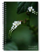 Spray Of White Flowers Spiral Notebook