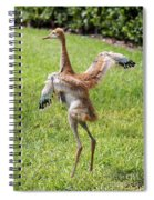 Spread Your Wings And Try To Fly Spiral Notebook