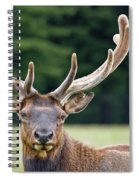Spring Antlers Spiral Notebook
