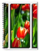 Spring Beauty Triptych Series Spiral Notebook