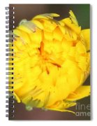 Spring Chick Spiral Notebook