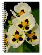 Spring Color Spiral Notebook