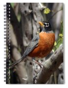 Spring Robin Spiral Notebook