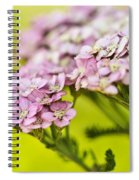 Spring's Delight Spiral Notebook