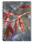 Springtime Japanese Maple Leaves Spiral Notebook