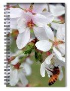 Springtime Weeping Cherry Tree Spiral Notebook
