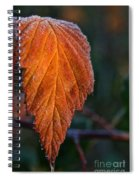 Sprinkled Frost Spiral Notebook
