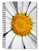 Square Daisy - Close Up Spiral Notebook