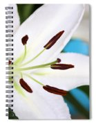 Square Lily On Blue Spiral Notebook