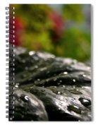 Squash Showered Spiral Notebook