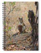 Squirrel And Cone Spiral Notebook