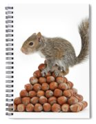 Squirrel And Nut Pyramid Spiral Notebook