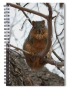 Squirrel Eating In The Frost Spiral Notebook
