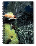 Squirrel Fish Spiral Notebook