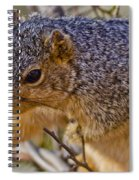 Squirrel Having A Heart Attack Spiral Notebook