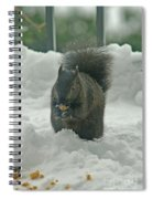 Squirrel In The Snow Spiral Notebook