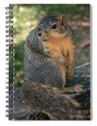 Squirrel Looking For A Hand Out Spiral Notebook