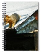 Squirrel On A Hot Tin Roof Spiral Notebook