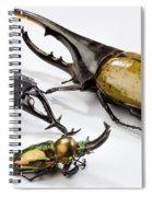 Stag Beetles Spiral Notebook