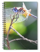Stained Glass Inspiration Feminine Spiral Notebook