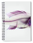 Stained Rockbass Fish Spiral Notebook