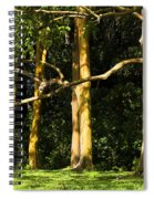 Stand Of Rainbow Eucalyptus Trees Spiral Notebook