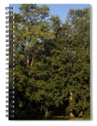 Stand Of Sugar Maple Trees Spiral Notebook