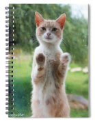 Standing Cat Spiral Notebook