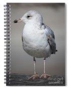Standing Seagull Spiral Notebook