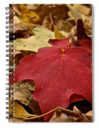 Standouts Spiral Notebook