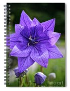 Star Balloon Flower Spiral Notebook
