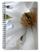 Star Magnolia Spiral Notebook