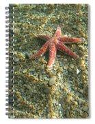 Starfish In Shallow Water Spiral Notebook