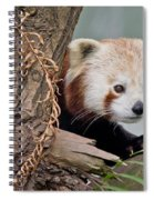 Stealthy Red Panda Spiral Notebook