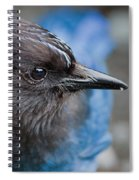 Stellars Jay Up Close And Personal Spiral Notebook