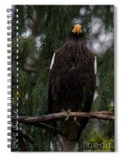 Steller's Sea Eagle Spiral Notebook