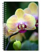 Stem Of Orchids Spiral Notebook