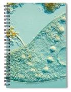 Stentor Coeruleus Spiral Notebook
