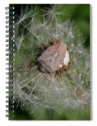 Stink Bug On Dandelion Seed Head Spiral Notebook