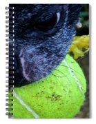 Stink Eye Spiral Notebook
