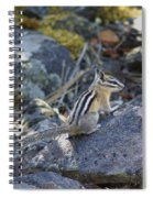 Straight Tailed Chipmunk On A Rock Spiral Notebook