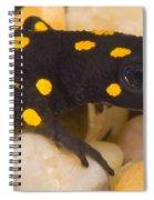 Strauchs Spotted Newt Spiral Notebook
