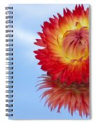 Strawflower Reflection Spiral Notebook